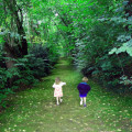 Discover in Britain a walk in the woods