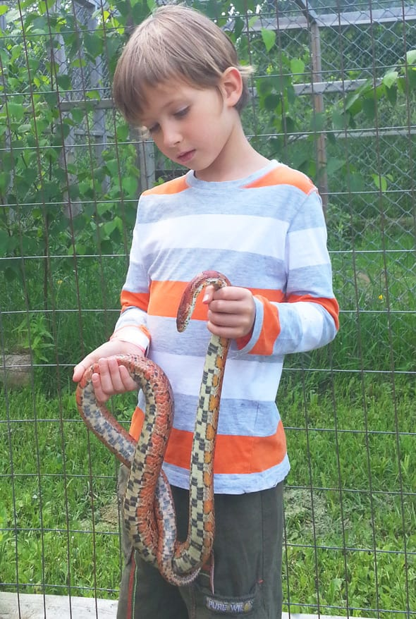 Theo with corn snake