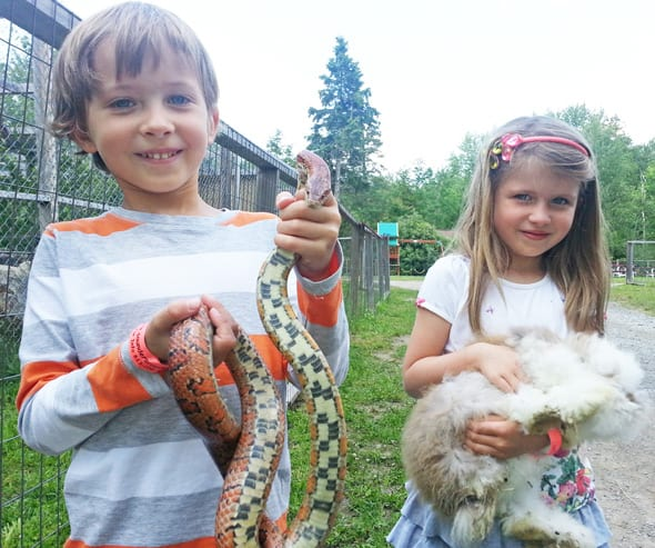 Corn snake and Angora rabbit