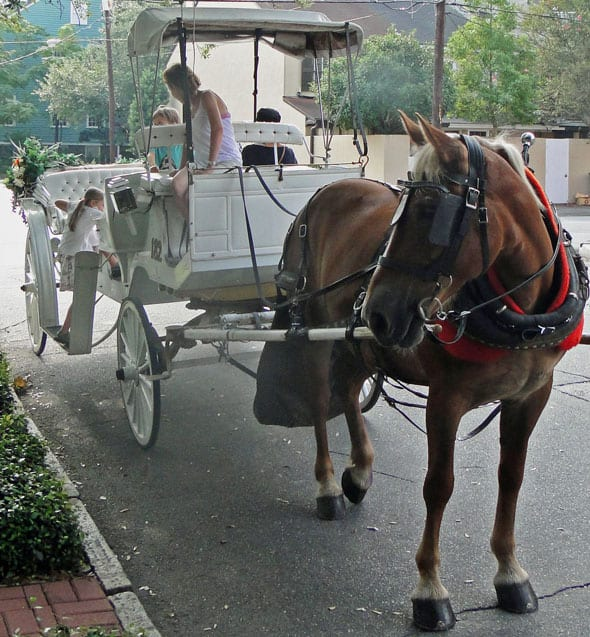 Horse carriage ride savannah kids