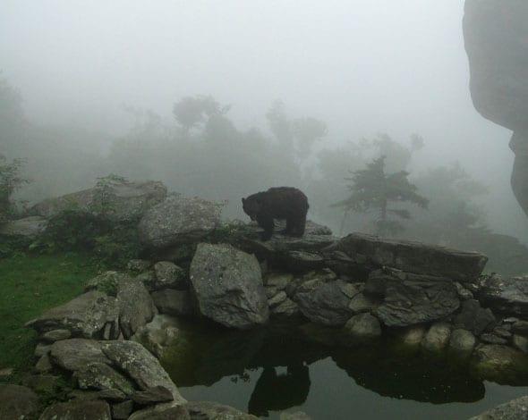 Bear reflection on Grandfather Mountain