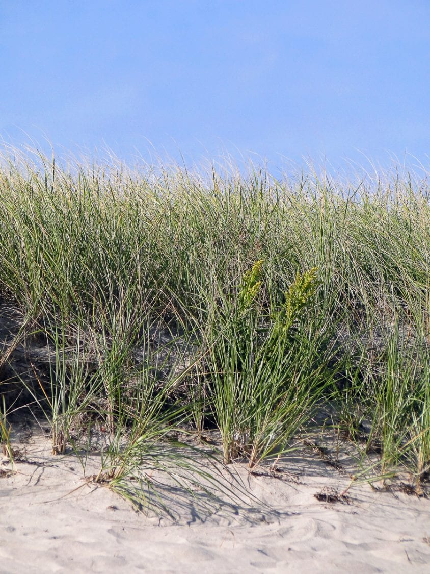 beach walk with kids dune grass