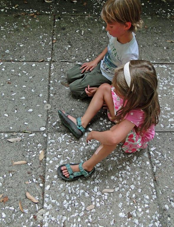 oyster shells sidewalk savannah