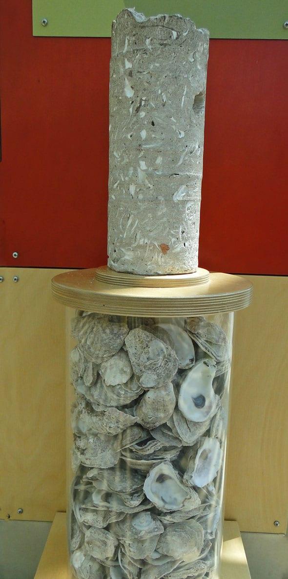 Oyster Shells ArtZeum Savannah