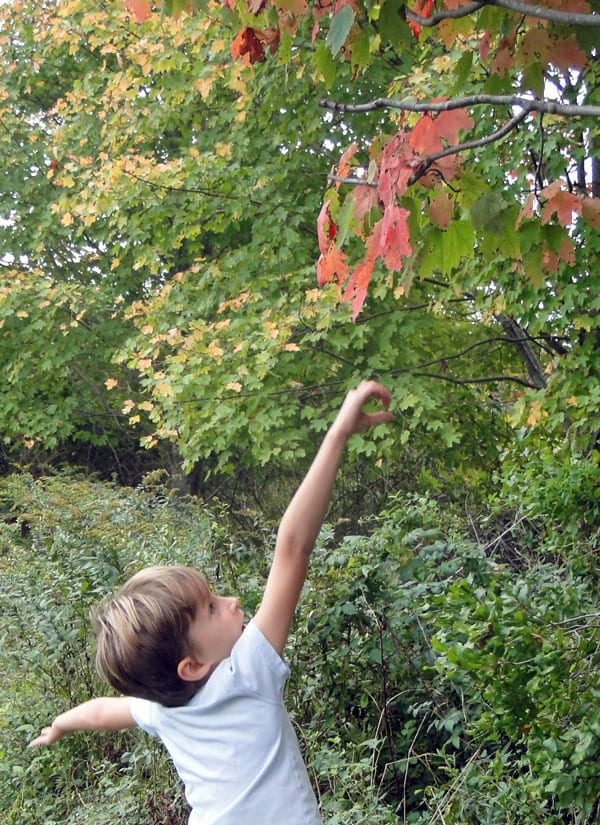 jumping grab red leaf