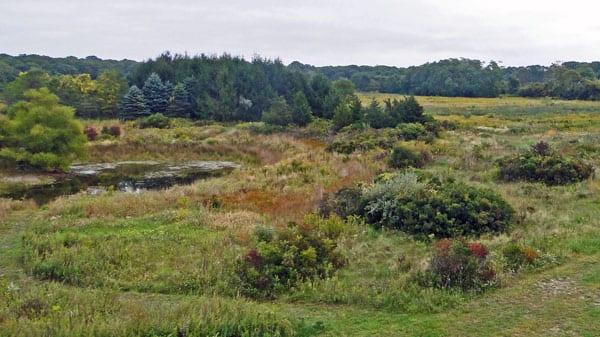 walk nature reserve