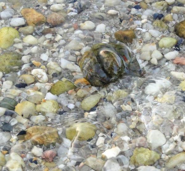 rocks shells underwater