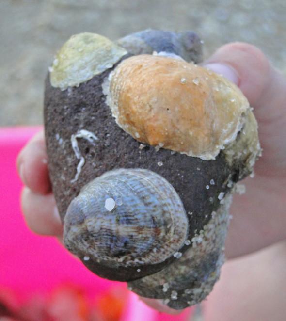 shells on stone