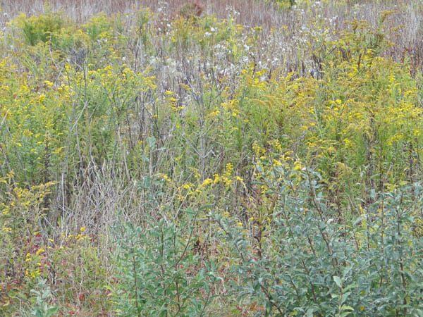 Soft pastels in field