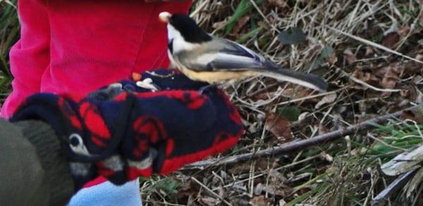 bird in hand morton