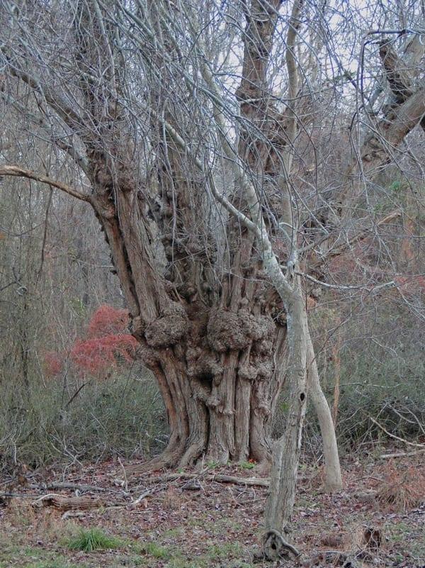 tree morton national wildlife refuge