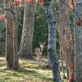 deer front garden