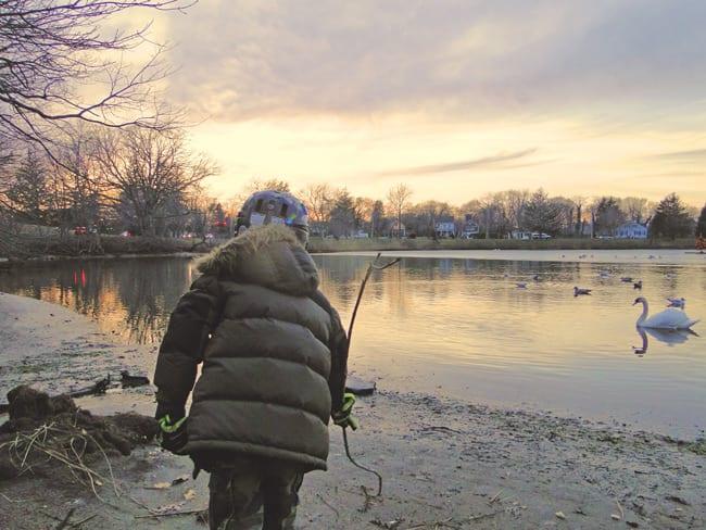 sun setting swan lake pond