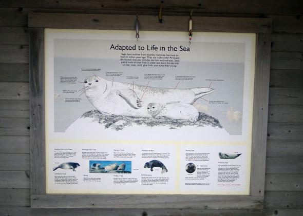 Seal Haul Montauk seal sign