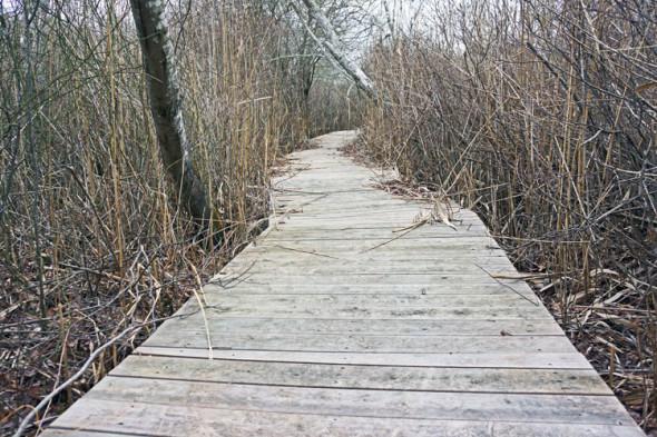 boardwalk sagg swamp