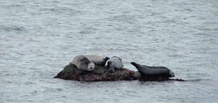 montauk point seals hauling out