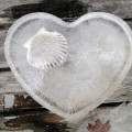Project 365 shell frozen in heart shaped ice