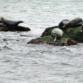 silent sunday 30 seals