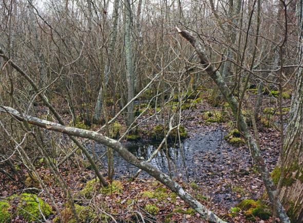 sagg swamp preserve