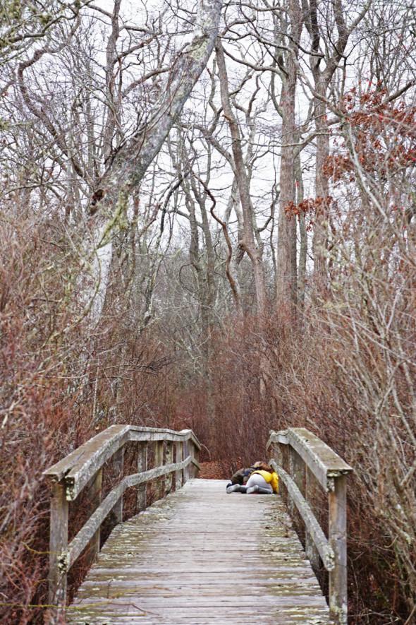 boardwalk bridge through swamp