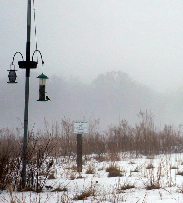 Hamptons NY Winter Birdfeeder