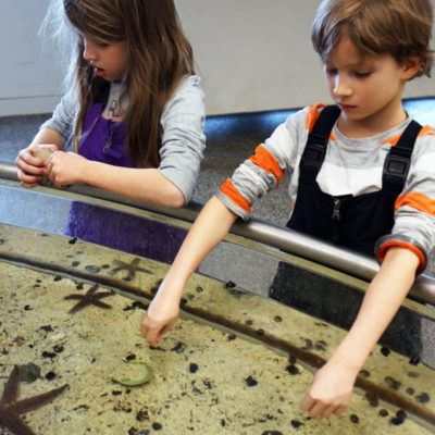 Nature's caretakers – wildlife for kids in the Hamptons