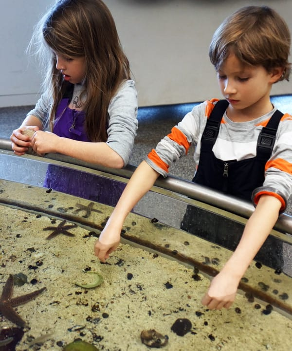 SoFo marine touch tank