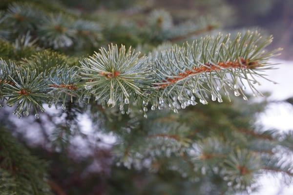 raindrops branch