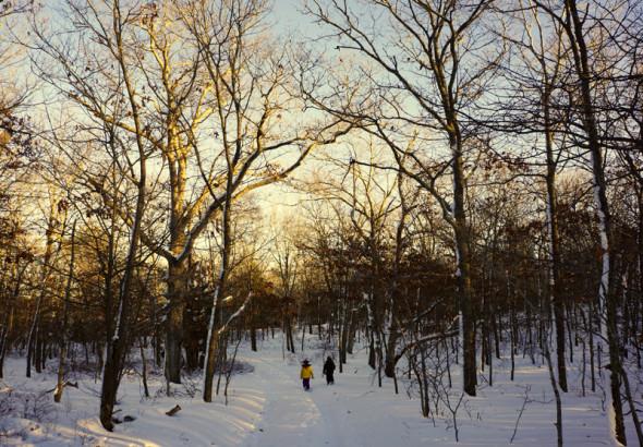 walking snowy woods