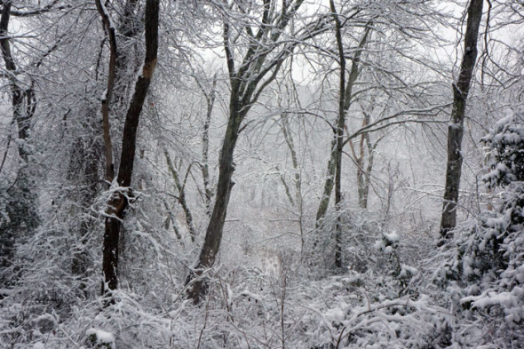 winter wonderland woods