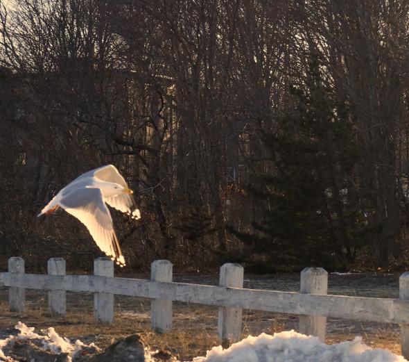 sunlight seagulls wings