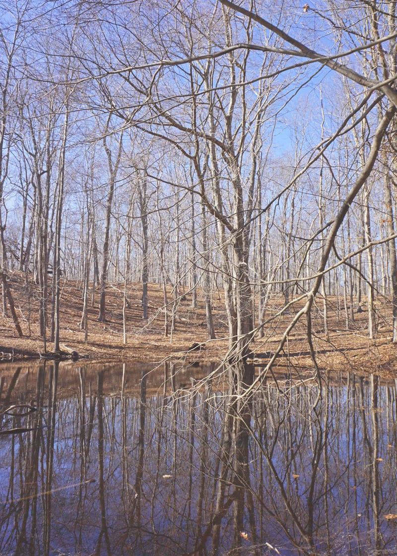 vernal pond day time