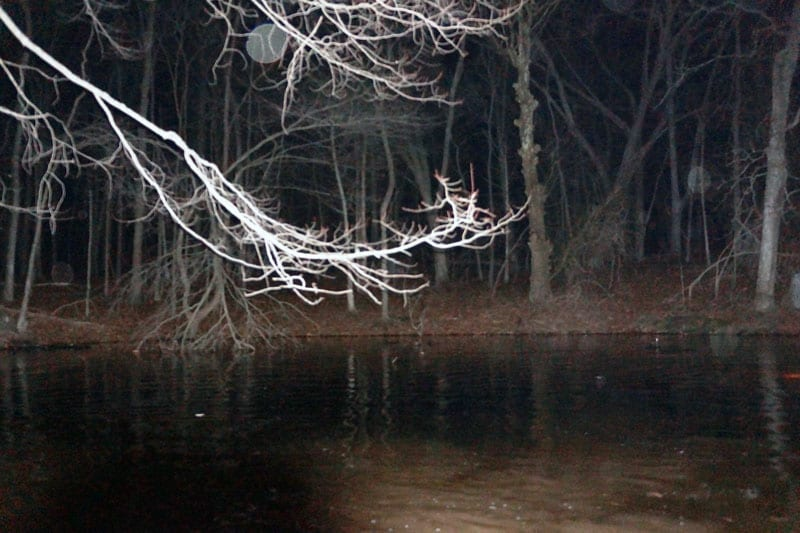 Salamander hunt vernal pool nighttime