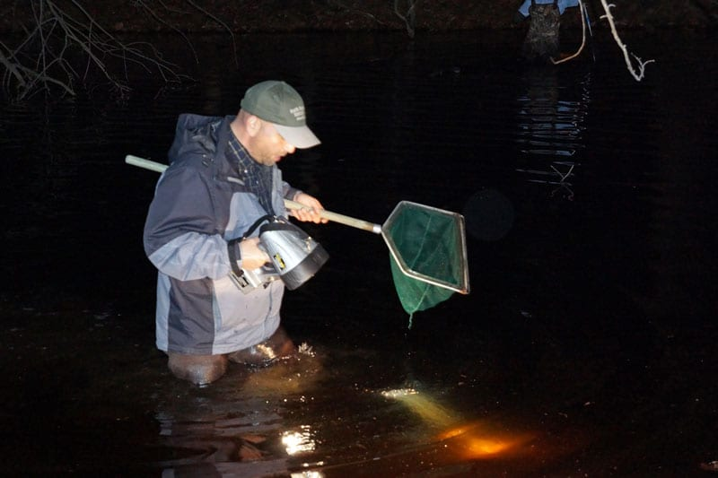 net flashlight search salamanders