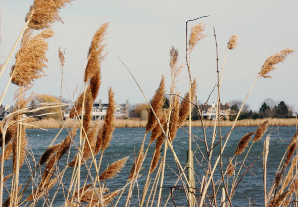 reeds and houses