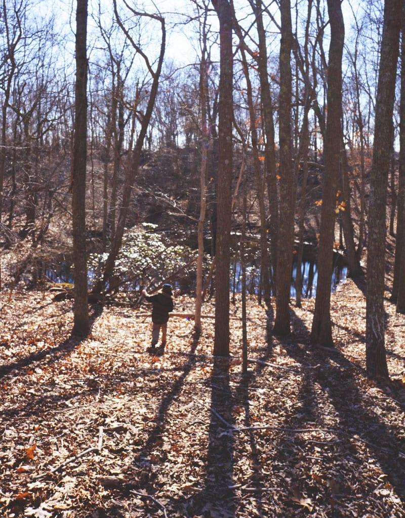 vernal pool woods