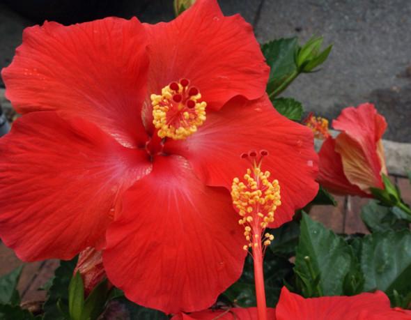 red flower savannah