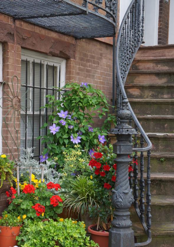 flowers plants savannah staircase