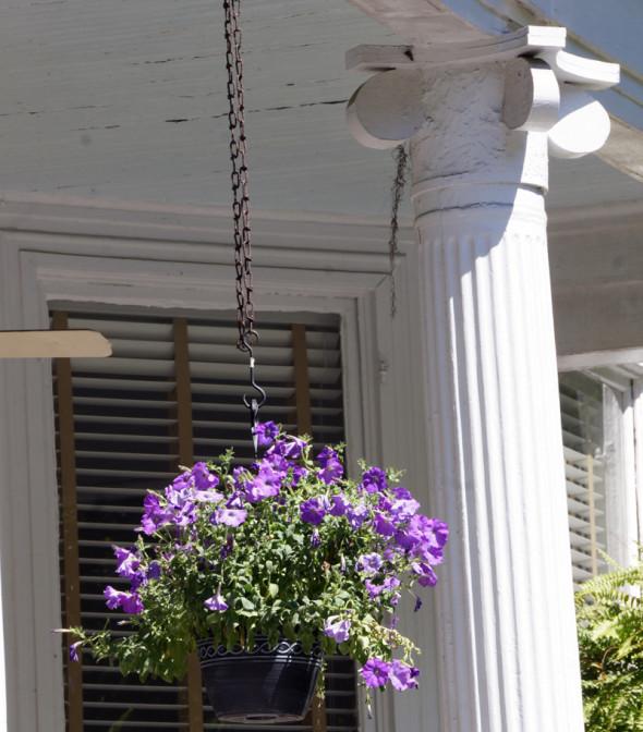 Hanging flower basket savannah