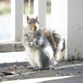 squirrel standing seeds