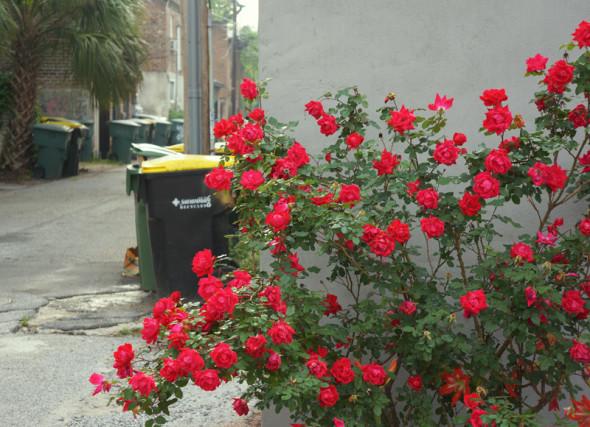 flowering bush savannah alleyway