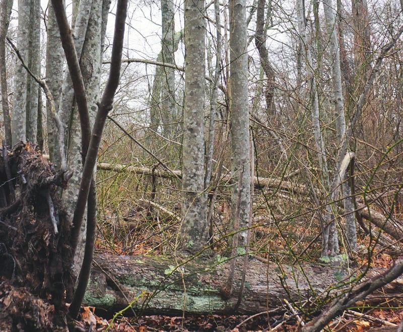 trees growing fallen trunk