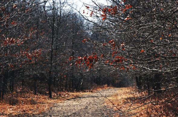 hamptons path long belt