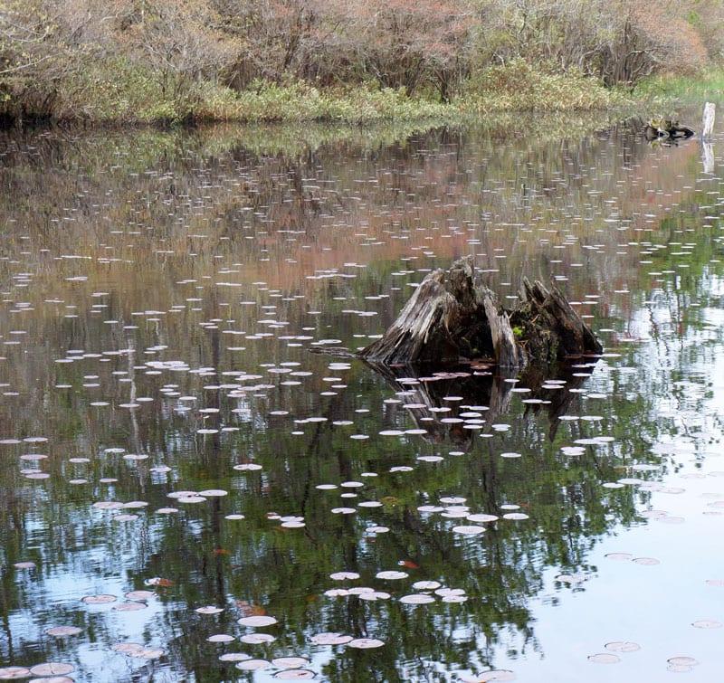Munns-Pond