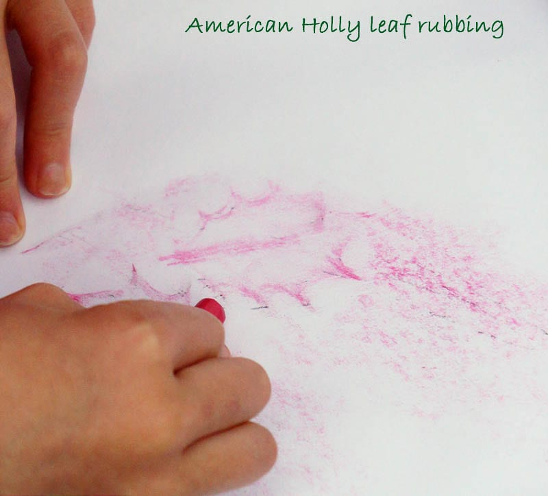 Nature Detectives American holly leaf rubbing