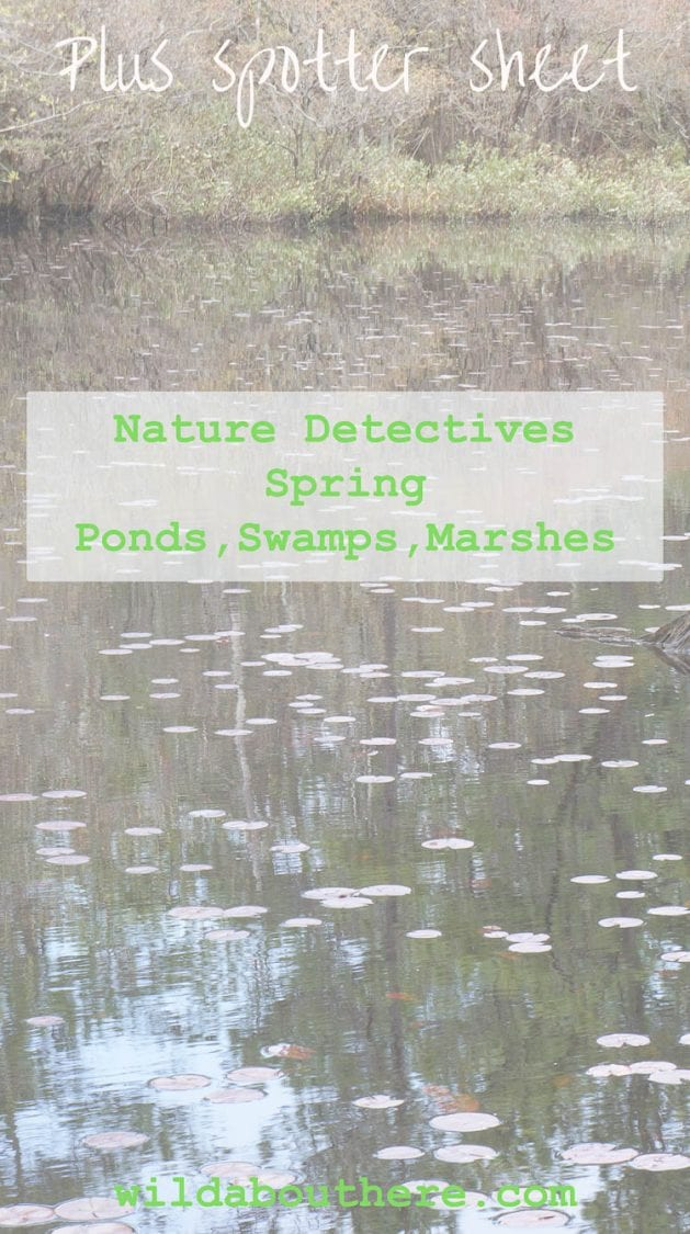 Nature Detectives USA Ponds Swamps Marshes