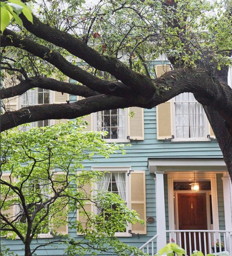Branches in a live oak in Savannah