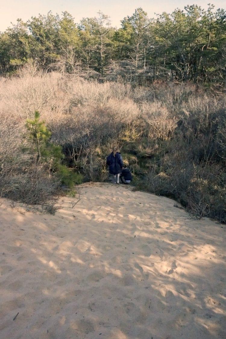 The Walking Dunes taking over wetland