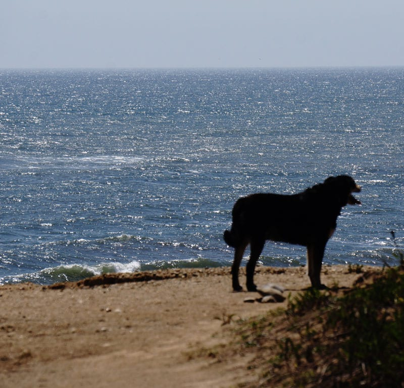 Dog on bluff in Shadmoor State Park