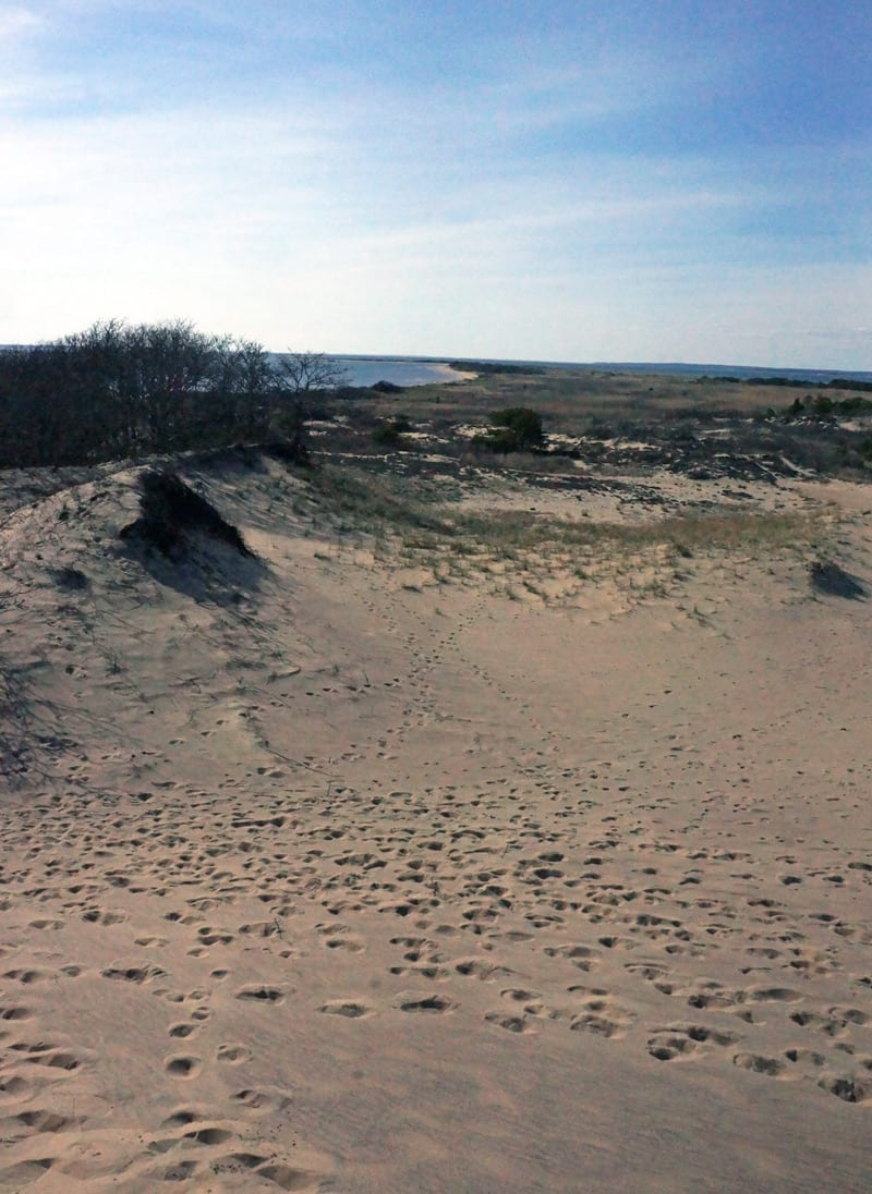 Bay and The Walking Dunes